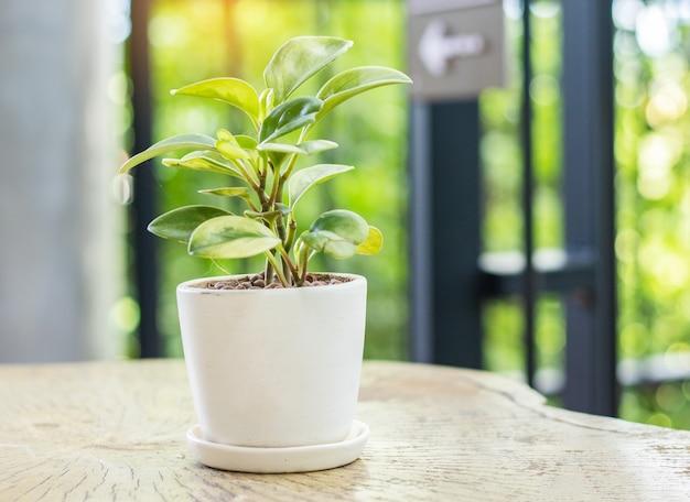 Le pot de plante est placé sur la table.