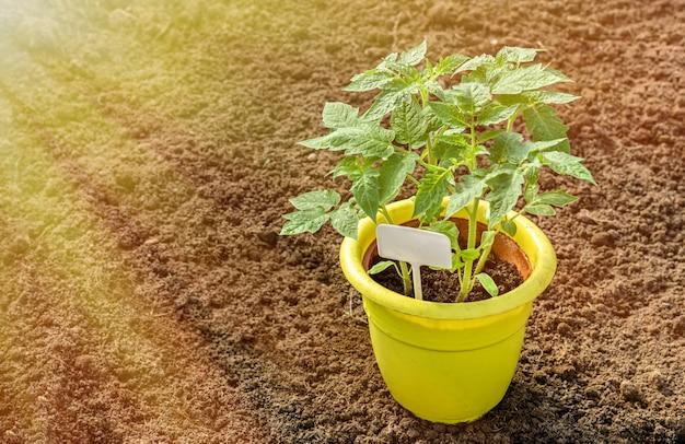Pot en plastique jaune pour les semis.