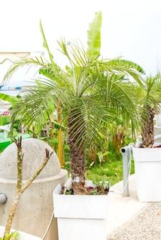 Pot en plastique avec petit palmier sur sol en ciment et lumière du soleil en soirée