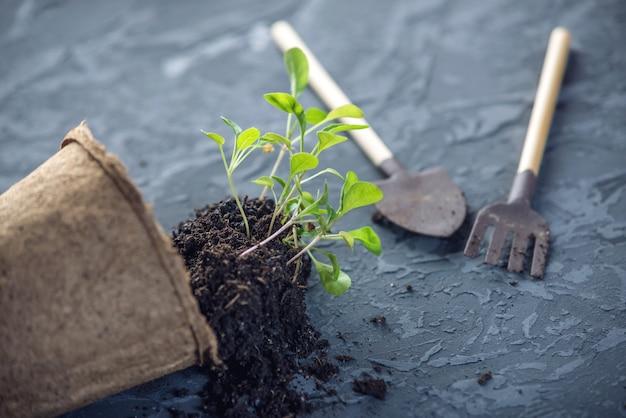 Pot à terre et pousses de plantes vertes fleurs