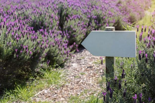 Poteau indicateur sur le champ de lavande australienne