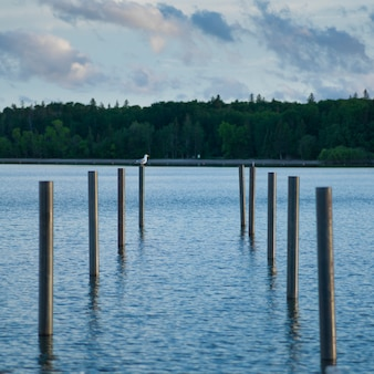 Poteaux en bois dans le lac, lac winnipeg, riverton, parc provincial hecla grindstone, manitoba, canad