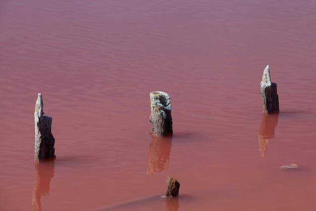 Des poteaux ou des supports en bois sortent de l'eau. lac rose salé. la couleur unique du lac est donnée par la microalgue halophile dunaliella salina.