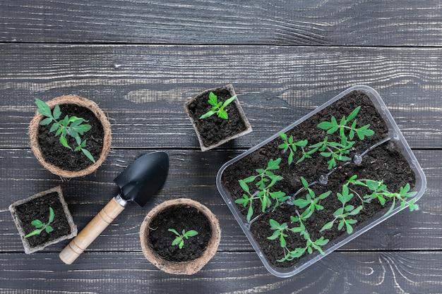 Pots écologiques avec jeunes pousses de tomates et truelle de jardin sur fond de bois