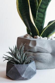 Pots de fleurs élégants avec des plantes vertes. décoration de maison.