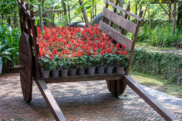 Pots de fleurs avec des fleurs rouges sur un chariot en bois dans un jardin tropical à danang, vietnam, close up