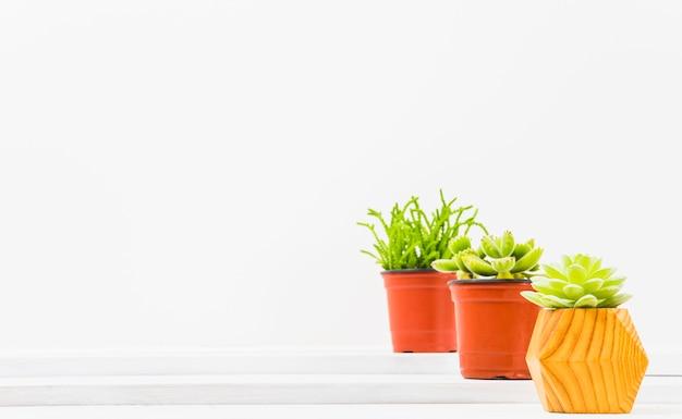Pots avec de jolies plantes succulentes