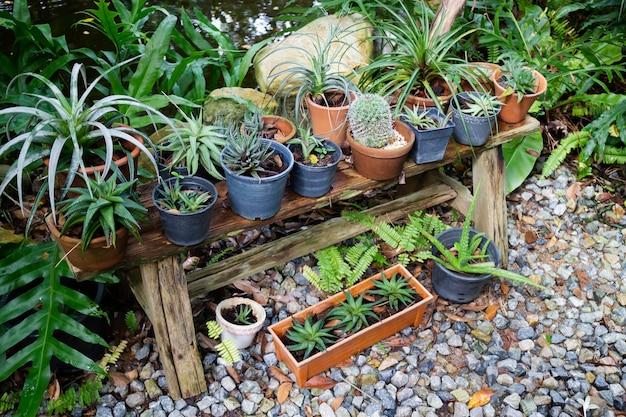 Pots de plantes vertes dans le jardin, stock photo