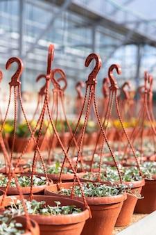 Pots en plastique suspendus avec de jeunes plantes à fleurs poussant en serre