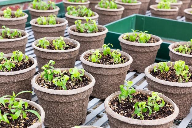 Pots avec des semis dans le jardin botanique.