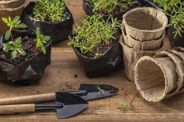 Pots tofny et outils de jardin transplantant des semis de fleurs à partir de sacs en plastique, espace de copie
