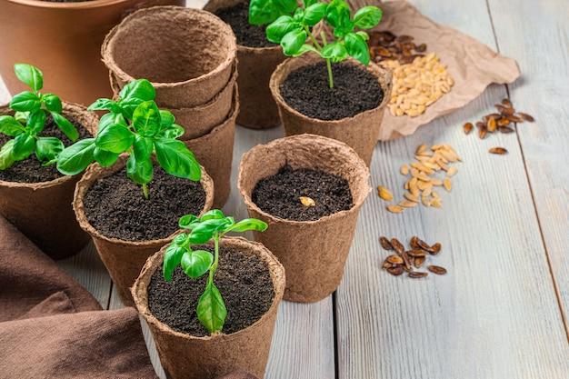 Pots de tourbe avec des semis et des graines sur un tableau blanc. vue latérale avec espace de copie.