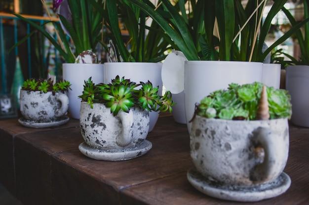 Potte de plantes succulentes à la maison dans des tasses en céramique grises texturées