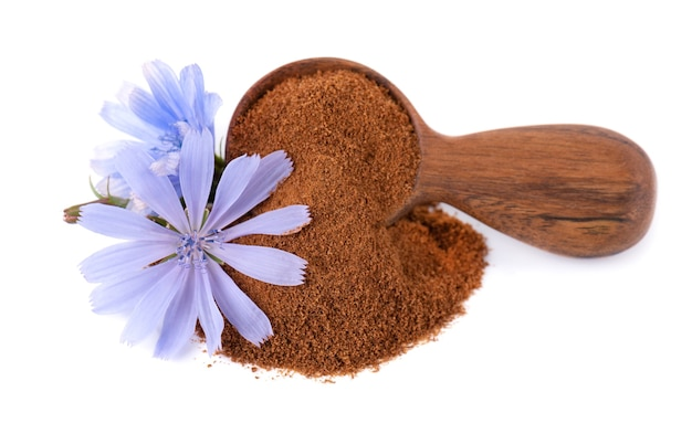 Poudre de chicorée et fleur dans une cuillère en bois isolé sur fond blanc cichorium intybus