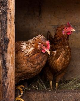 Poules dans le concept de mode de vie de pays de nid