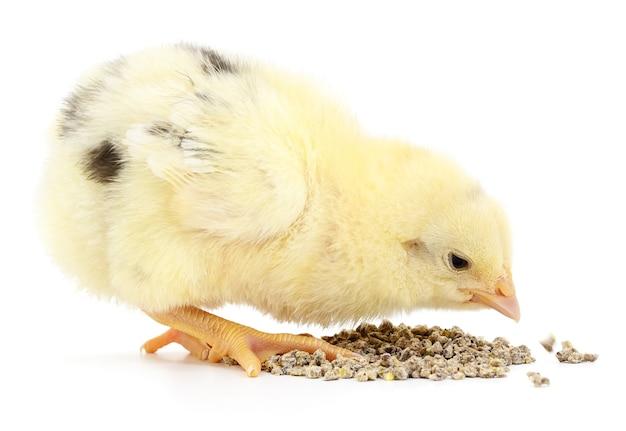 Poulet avec de la nourriture sur fond blanc.