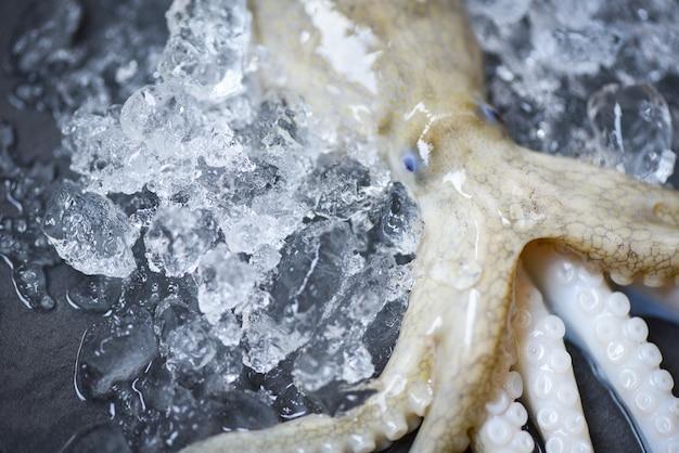 Poulpe frais calamars crus gourmet d'océan avec fond sombre de glace