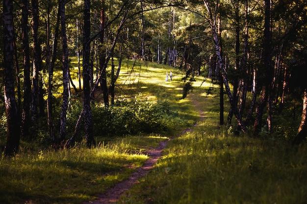 Pour s'aimer. silhouettes de personnes photo conceptuelle. forêt de pins