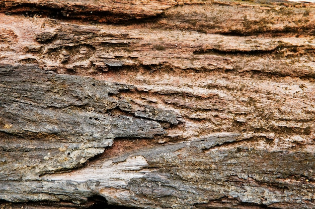 Pourrir le bois des termites pour le fond et la texture