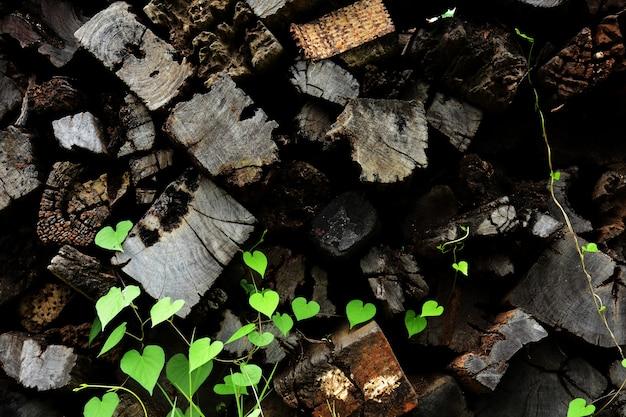 Pourriture de vieux matériaux de construction en bois bois pour le fond et la texture.