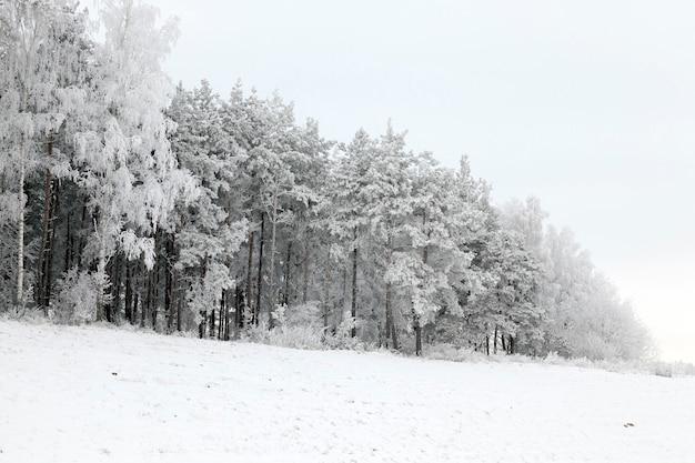 Poussant sur une colline d'arbres couverte de givre, tracée en hiver pendant le gel, temps nuageux et ciel gris