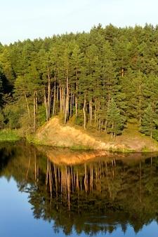 Poussant sur une colline près d'une rivière de hauts pins et de sable jaune reflétée sur la surface de l'eau, un paysage avec un ciel bleu au début de l'automne