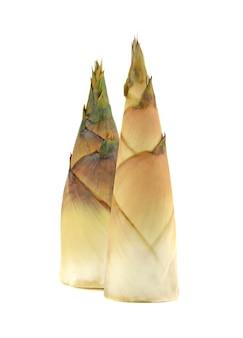 Pousse de bambou crue sur fond blanc