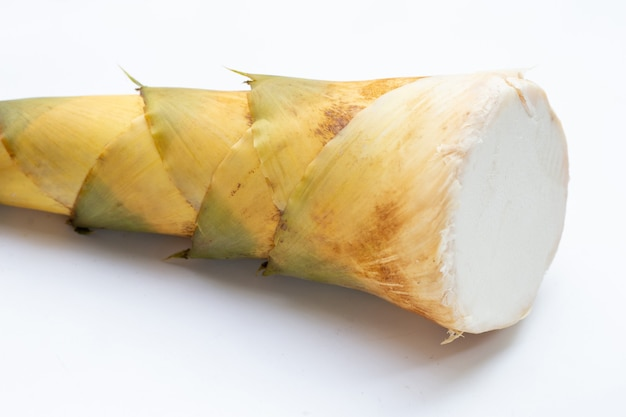 Pousse de bambou sur fond blanc.