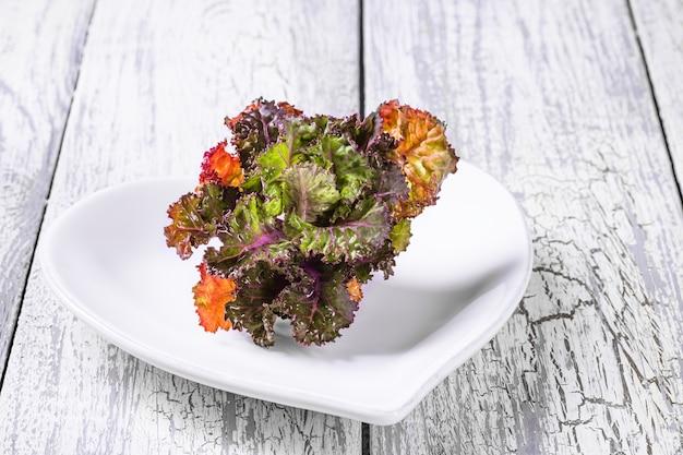 Pousse de fleurs de kalettes fraîches, saines et colorées sur un fond en bois.