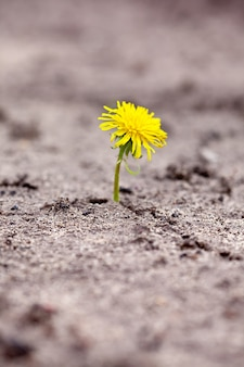 Pousse à travers le sable