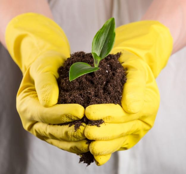 Pousse verte dans le sol