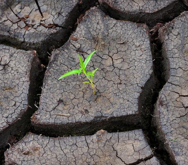 La pousse verte est dans la terre sèche
