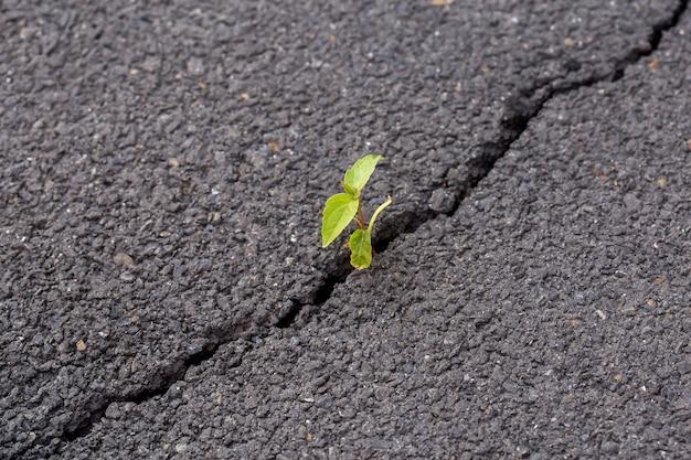 Pousse verte, plante sur asphalte craquelé gris, concept leader