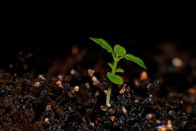 Pousse verte de plus en plus de la graine