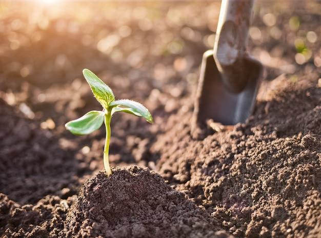Pousse verte poussant du sol