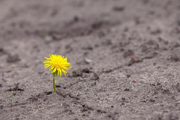 Poussée de fleur jaune