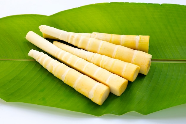 Pousses de bambou sur feuille verte