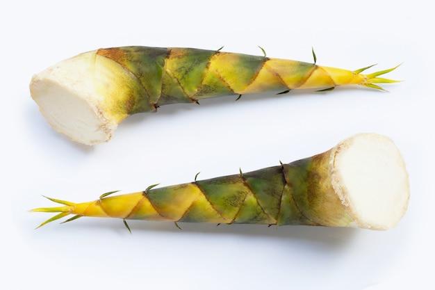 Pousses de bambou sur fond blanc.