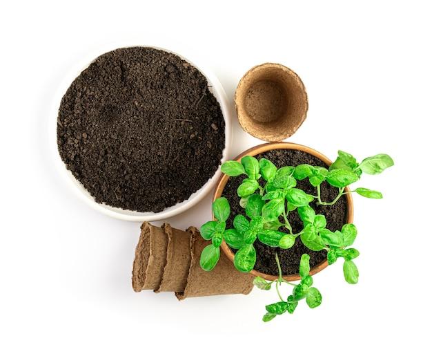 Pousses de basilic, pots de semis et sol sur fond blanc. vue de dessus. le concept de culture.