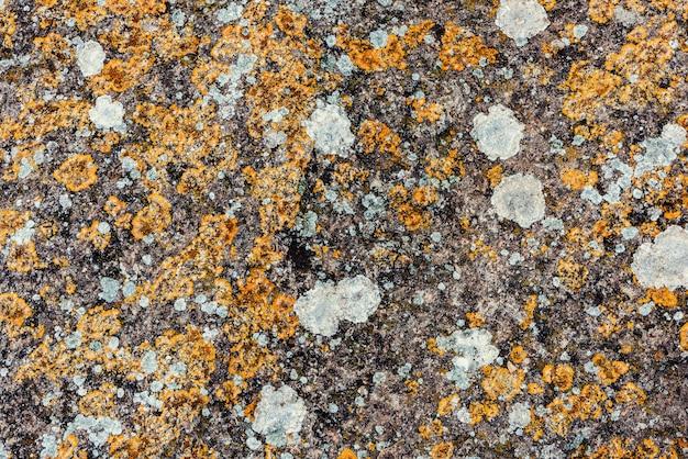 Pousses de mousse sur un rocher