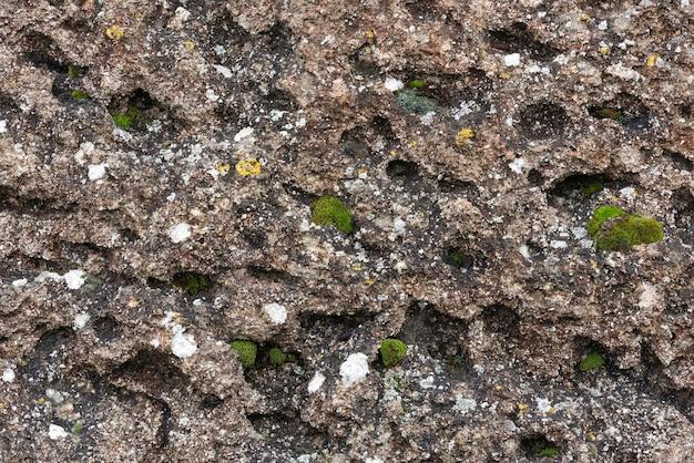Pousses de mousse verte sur un rocher