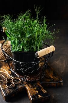 Pousses de pois microgreen sur la vieille table en bois. style vintage. concept végétalien et sain. faire pousser des germes.