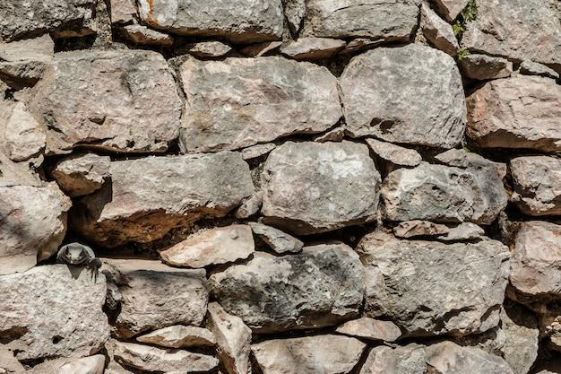 Pouvez-vous trouver l'iguane?