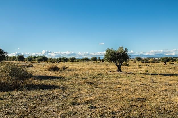 Prairie en automne avec des couleurs jaunes et un ciel bleu