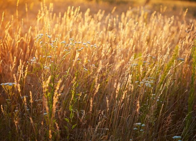 Prairie d'été sur un coucher de soleil