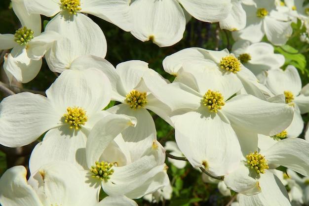 Prairie de fleur