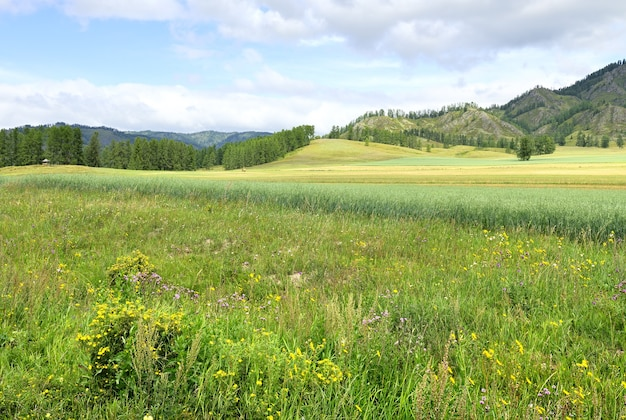 Une prairie fleurie au pied des montagnes sous un ciel bleu nuageux altaï sibérie russie