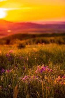 Prairie avec des fleurs sur le fond de coucher de soleil