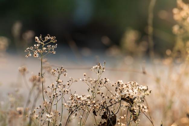 Prairie forestière avec des herbes sauvages, macro image avec une faible profondeur de champ, arrière-plan flou