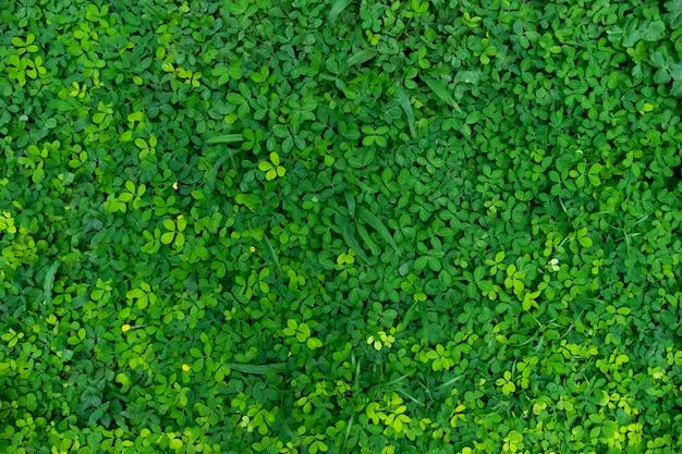 Prairie fraîche et verte pour le sujet de fond est floue
